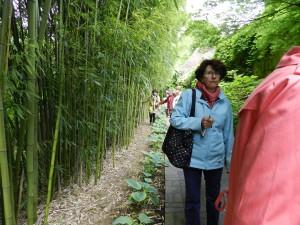 la bambouseraie demande un gros travail pour la limiter