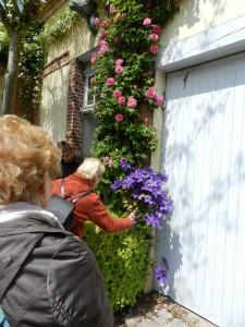 La clématite et le rosier qui nous accueillent à la porte attirent des abeilles un peu spéciales