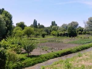 très beau jardin , maraîcher