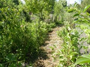 Jardin naturel ausi les prtits poids sont laisé sur place.